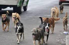 Esterilizarán a perros callejeros